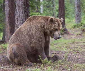 bear-oldsitting